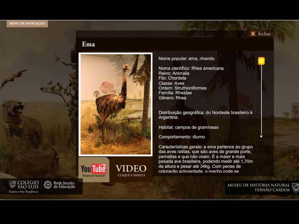 waba-portfolio-educacao-ColegioSaoLuiz-Museu02